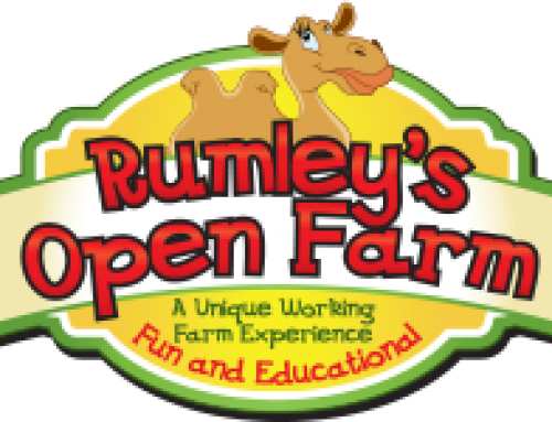 Senior Infants School Tour – Rumley's Open Farm